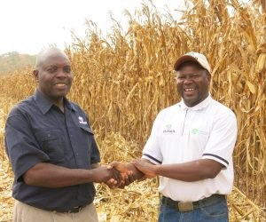Successful CF Farming